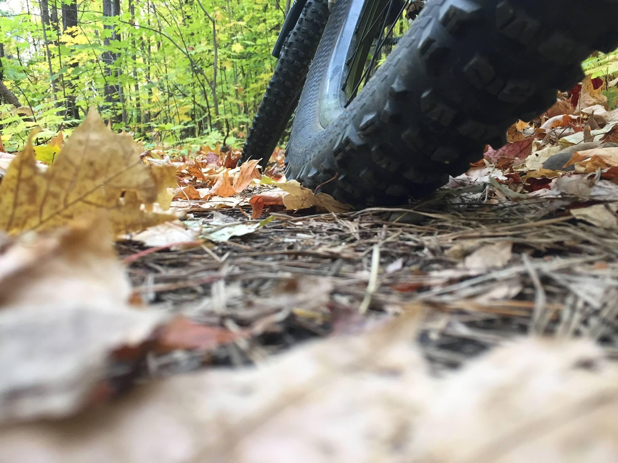 Mountain Bikes, Frog Hollow Bikes